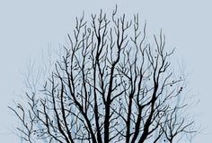 Miembros de árbol descubiertos Fotografía de archivo libre de regalías
