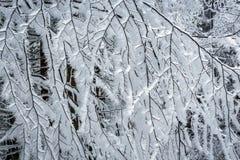 miembros y árboles helados Fotografía de archivo