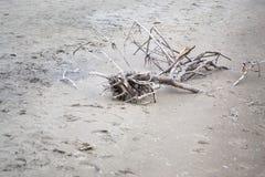 Miembros y ramas de árbol en la arena Imagen de archivo