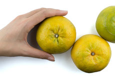 mienie pomarańcze Fotografia Stock