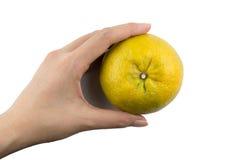 mienie pomarańcze Zdjęcia Royalty Free