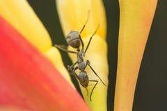 mier en aard beschermt de macrobrandkast de wereld aard Stock Fotografie