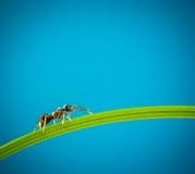 Mier en groen gras Royalty-vrije Stock Afbeelding