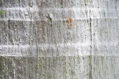 Mier op de textuurachtergrond van de kokospalmboomstam Stock Foto's