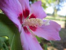 Mier op een bloemblaadje Stock Afbeelding