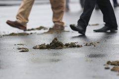 Mierda animal en la calle Fotos de archivo