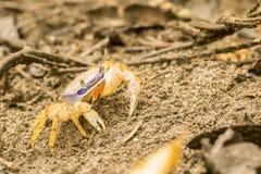 Mierda de la tierra en Cahuite, Costa Rica Imagen de archivo libre de regalías