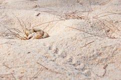 Mierda en la playa Fotografía de archivo libre de regalías