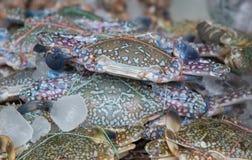 Mierdas azules frescas en el hielo, marisco en el mercado de Tailandia imagenes de archivo