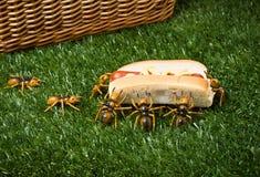 Mieren bij een Stealing Voedsel van de Picknick Royalty-vrije Stock Foto's