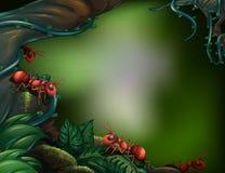 Mieren bij het regenwoud vector illustratie