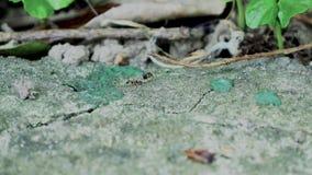 Mieren die dichte omhooggaande macro in werking stellen stock video