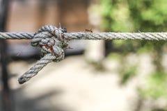 Mieren die op een kabel lopen Stock Foto's