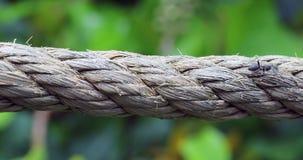 Mieren die over een Kabel lopen stock footage