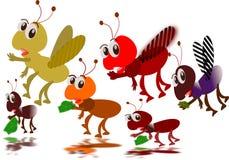 Mieren en honingsbij Stock Foto's