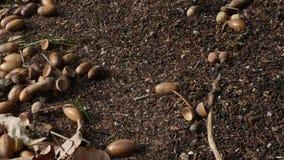 Mieren in het bos stock videobeelden