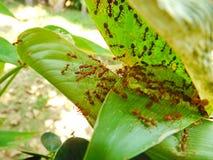 Mieren in het nest royalty-vrije stock afbeelding