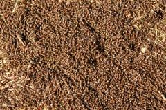 Mieren in het werk Stock Fotografie