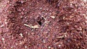Mieren in hun kolonies stock videobeelden