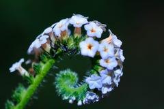 Mieren, Mieren op een bloem Stock Fotografie