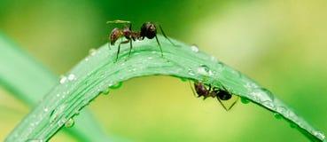 Mieren na regen #1 Royalty-vrije Stock Afbeeldingen