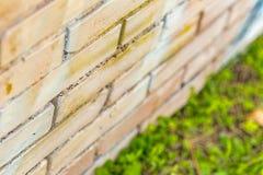 Mieren op de groeven Royalty-vrije Stock Foto