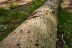 Mieren op de weg Royalty-vrije Stock Fotografie