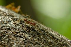 Mieren op een boom in aard royalty-vrije stock afbeelding