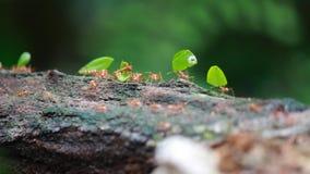 Mieren op het werk stock video