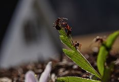 Mieren op het werk Stock Afbeelding