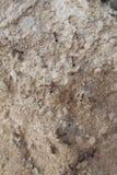 Mieren op weg Stock Foto's