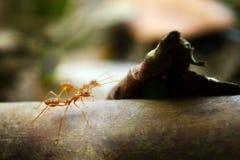 Mieren uiterst kleine wereld (Macro, selectief nadrukmilieu op bladachtergrond) Royalty-vrije Stock Foto's