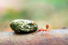 Mieren uiterst kleine wereld (Macro, selectief nadrukmilieu op bladachtergrond) Royalty-vrije Stock Afbeeldingen