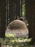 Mierenhoop stock foto
