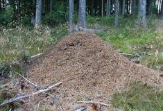 Mierenhoop Stock Fotografie