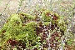 Mierenhoop die met mos wordt behandeld royalty-vrije stock foto