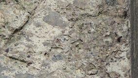 Mierenkader stock videobeelden