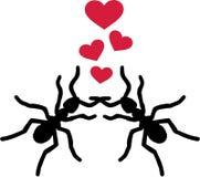Mierenliefde Stock Fotografie