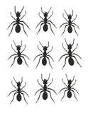 Mierensleep stock illustratie