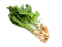 Mierikswortel met wortels op witte achtergrond stock foto's