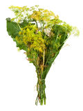 Mierikswortelbladeren Stock Foto