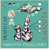 Śmiertelna amanita pieczarka ilustracja wektor