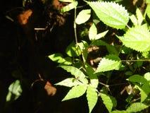 Śmiertelni insekty Zdjęcie Stock