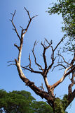 śmiertelny drzewo Zdjęcia Stock