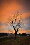Śmiertelny drzewo podczas zmierzchu Obrazy Royalty Free