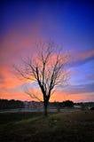 Śmiertelny drzewo podczas zmierzchu Obrazy Stock