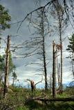 śmiertelny las Obrazy Stock