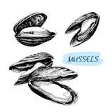 miesmuscheln stock abbildung
