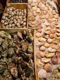 Miesmuscheln und Austern Lizenzfreies Stockfoto