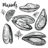 Miesmuschelvektorillustration Meeresfrüchteskizzen Lokalisiertes Engvaving von Muscheln lizenzfreie stockfotos